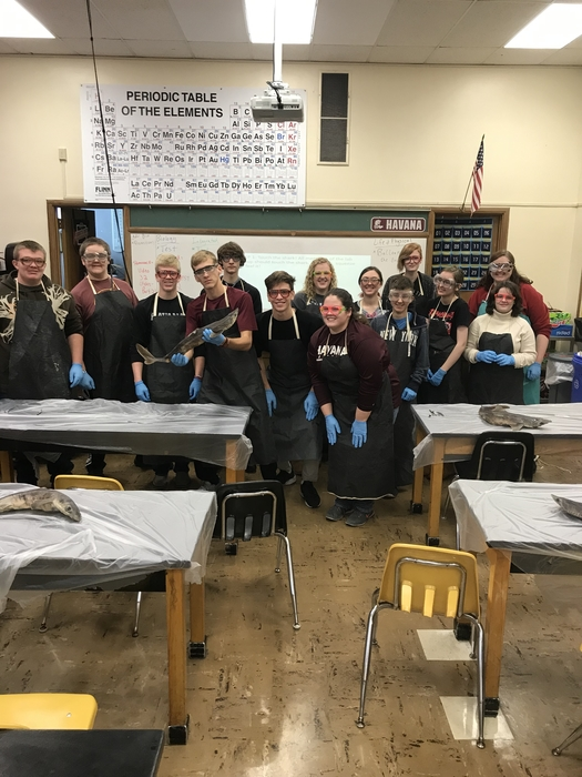 Advanced Biology dogfish shark dissection