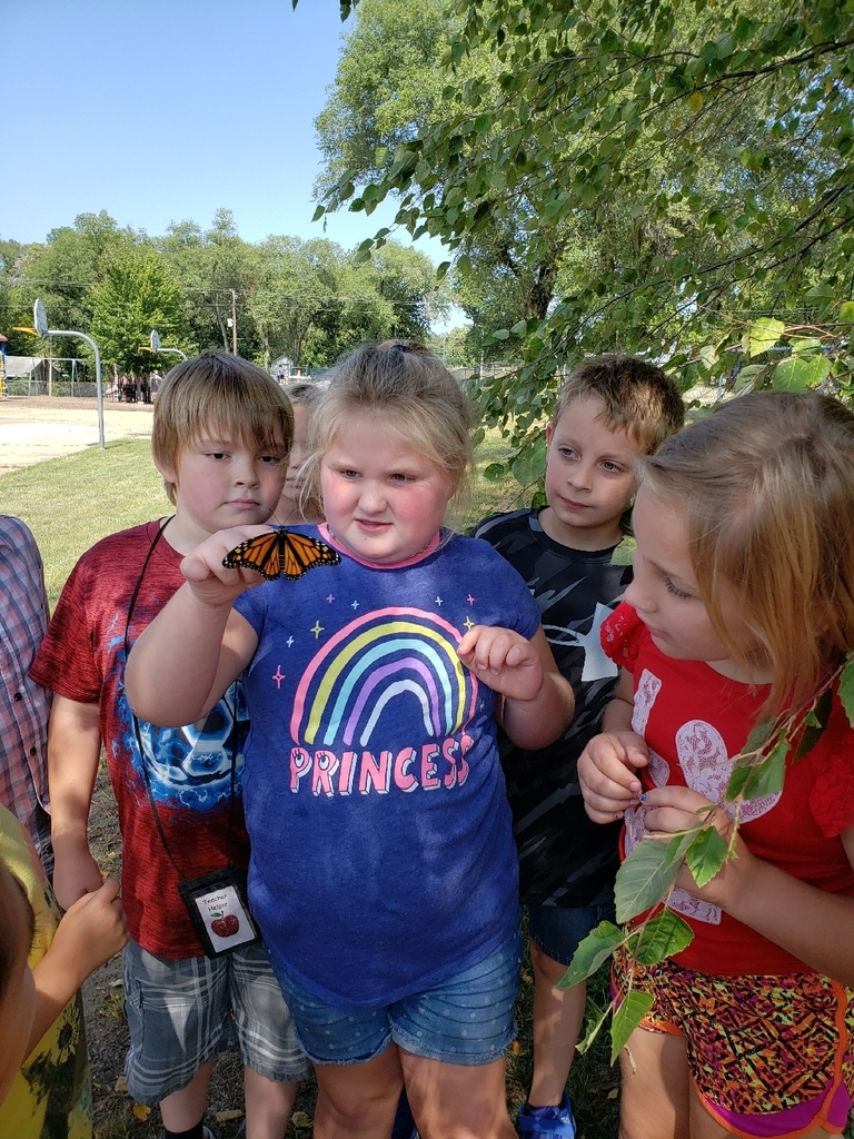2nd Graders have enjoyed learning about the Monarch Butterfly.  They have raised several from caterpillar to butterfly and enjoy releasing them for their journey south.