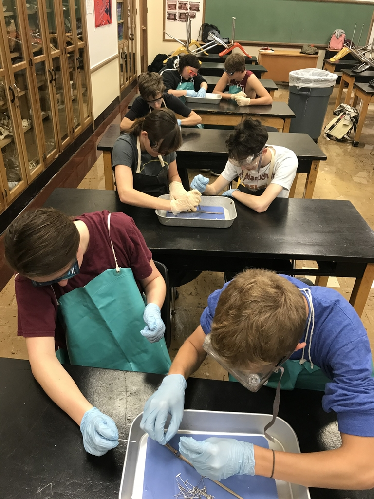 Earthworm dissection - 1st hour